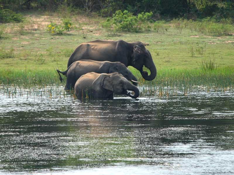 Safari Game Drives Sri Lanka - Sri Lanka Safari Game Drives - Safari Game Drives Yala - Yala Safari Game Drives - Mirissa Safari tours - Safari game drives in yala - yala game drives - Safari jeeps - jeep tours to yala from mirissa